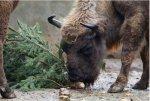 Петербуржцев призывают сдавать ёлки на благо животных