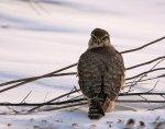 В Петербурге замечены редкие птицы