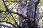 В Петербурге снова заметили сову
