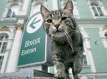 Эрмитажные коты включены в список необычных достопримечательностей