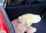 В Петербурге спасли трёх детёнышей тюленей