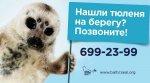 На дамбе Петербурга установят плакаты о помощи тюленям