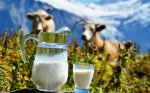 В Петербурге проверили молоко