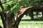 Петербургские садовники начали лечить деревья, пострадавшие во время непогоды