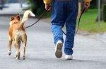 В Петербурге могут появиться новые площадки для выгула собак