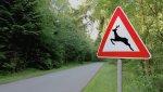 На петербургских дорогах появятся дорожные знаки «Дикие животные»