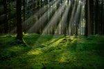 На полигоне «Северный» вырастят лес